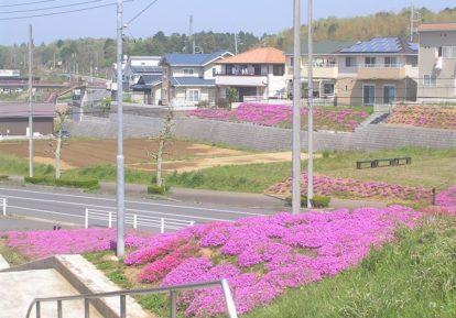 【茨城県 T様】土手を見事に彩る芝桜