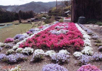【和歌山県 F様】お庭一面に広がる様々な芝桜