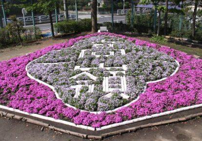 【T小学校様】校名を囲う芝桜