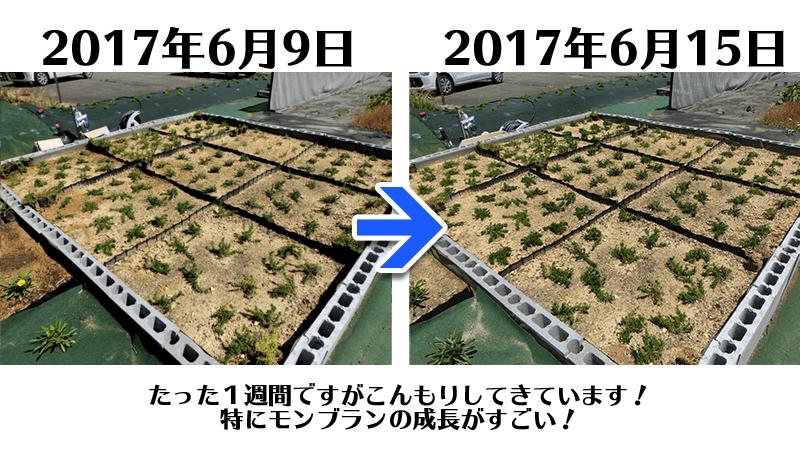20170615芝桜全景_比較