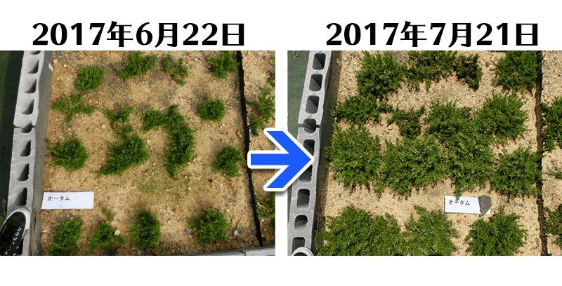 170721オータム比較
