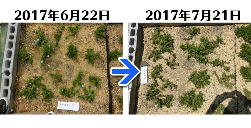 170721オーキントン比較