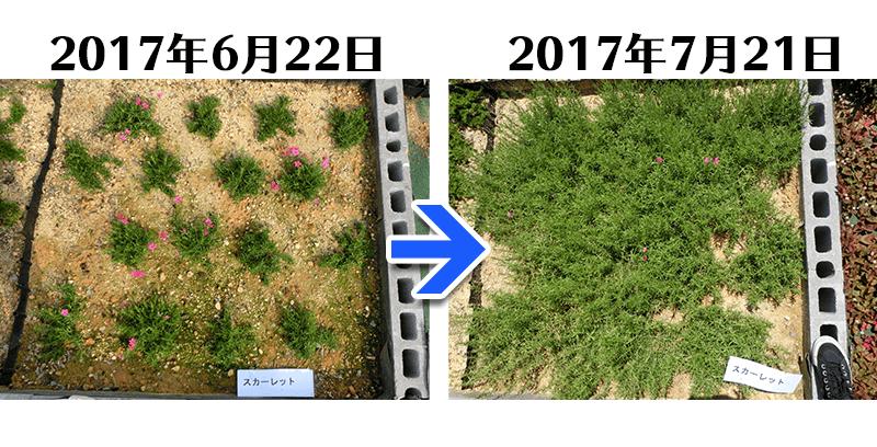 170721スカーレット比較