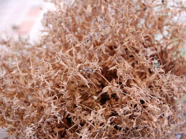 液体肥料による苗の変色