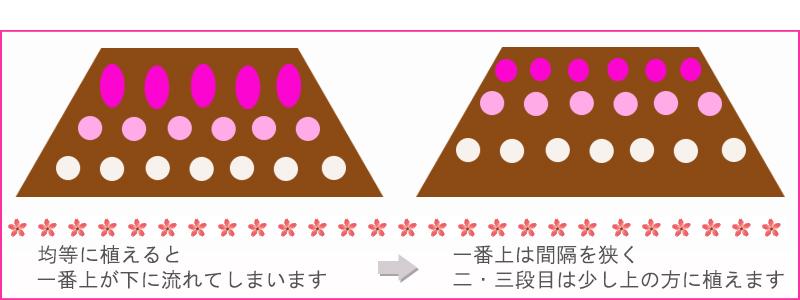 斜面の芝桜植栽イメージ