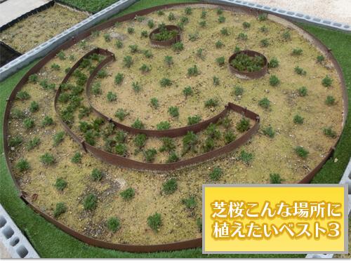 場所別芝桜の植え方