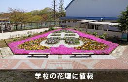 芝桜植栽事例(学校)②
