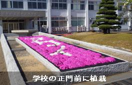 芝桜植栽事例(学校)③