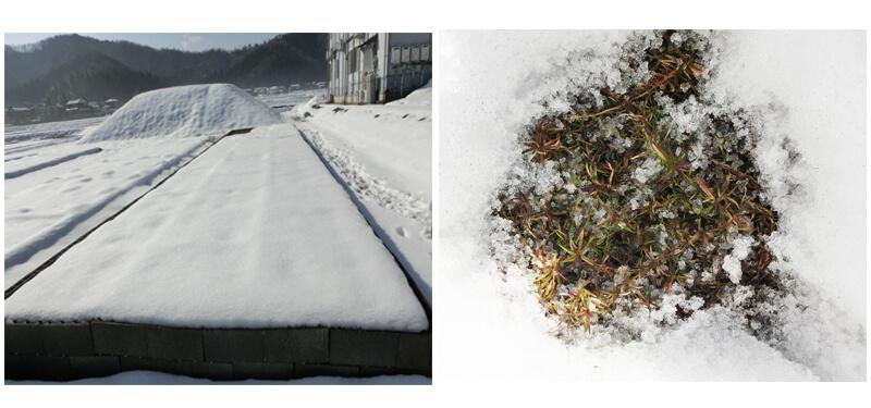 雪の中のスカーレットフレーム