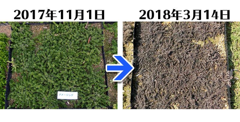 180314_アメージンググレース比較