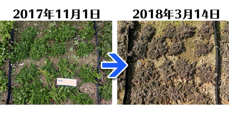 180314_多摩の流れ比較
