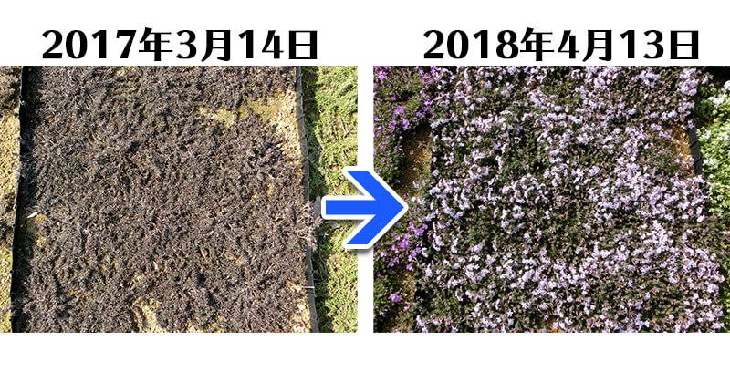 180413_アメージンググレース比較